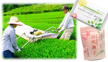 Osada Seicha  - Osada's Organic Green Tea